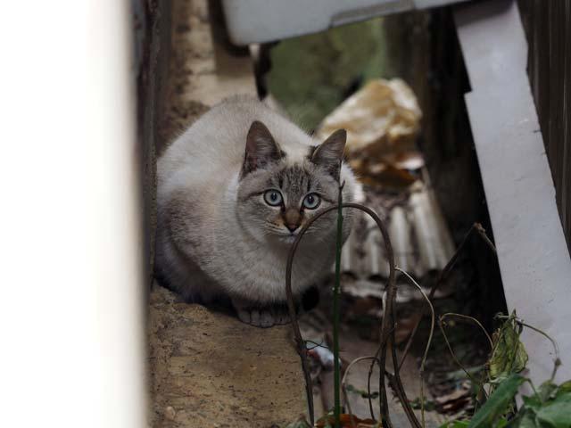 淡路島沼島の猫