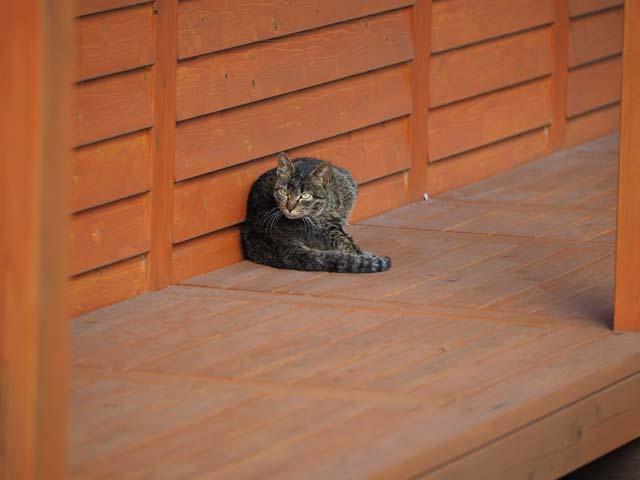 淡路島、沼島の猫
