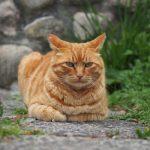 六甲鉢巻公園のネコたち