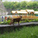 大阪城にはねこがいっぱい パート1