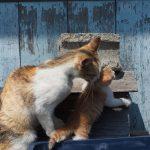 猫写真をうまく撮るためのポイント(撮影方法編)