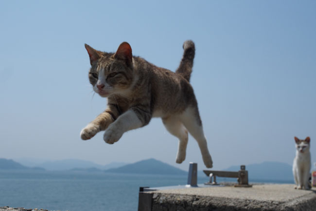 こちらでも猫がジャンプ!後ろの白い猫がいい味出してくれてますね。