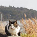 雪と猫の写真にチャレンジ