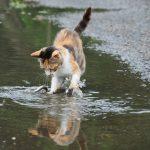 魚をキャッチする猫の写真