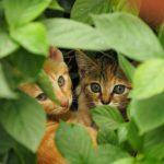 滋賀高島で出会った子猫たち