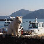 沖島の猫(琵琶湖のねこ島)