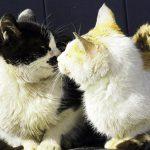 寒い季節に温まる猫写真5選