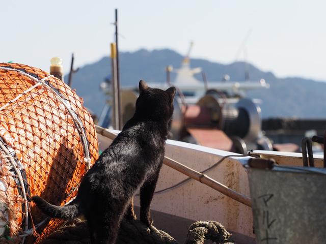 沖島、船上の猫
