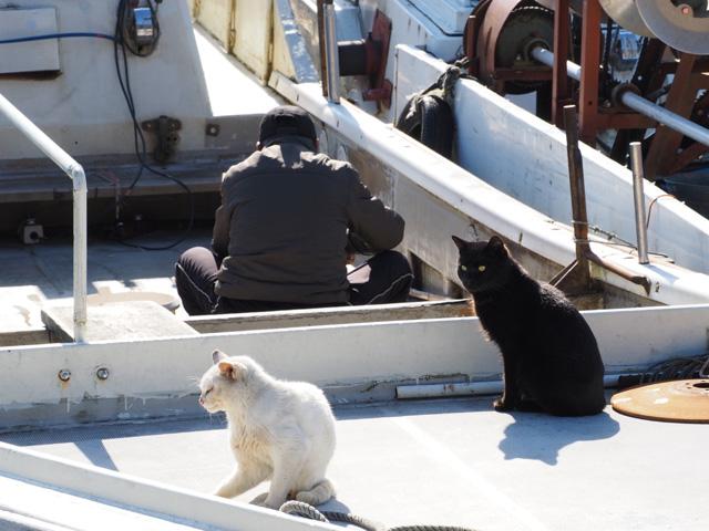 漁師さんと猫
