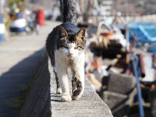 沖島の人懐こい猫