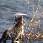 沖島猫写真行ってきました