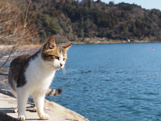 琵琶湖と猫