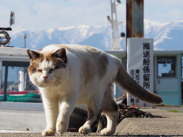 少し太った笑う猫