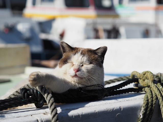 船で寝る笑った顔の猫