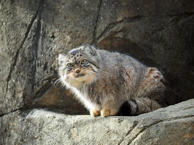 王子動物園の猫の写真