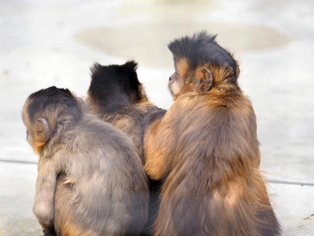 王子動物園の猿の写真