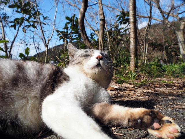 沖島のモデルねこ