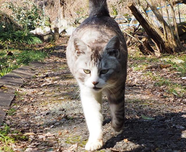 歩いてくる猫、ピント