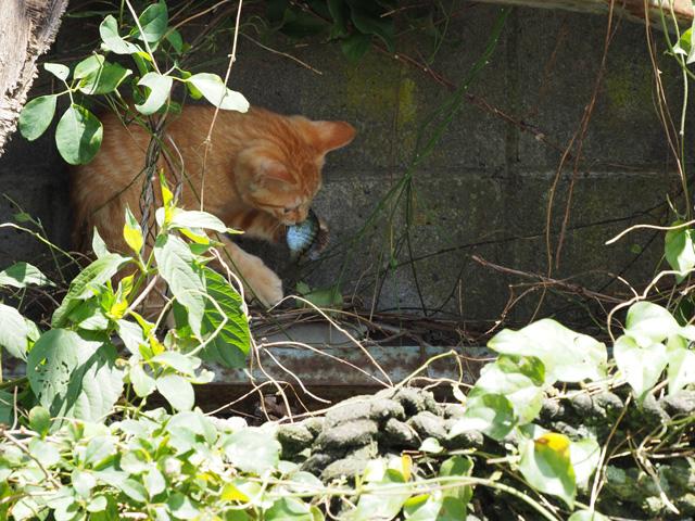 魚をたべる子猫