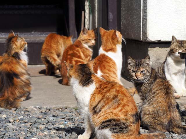 滋賀、猫ポイント