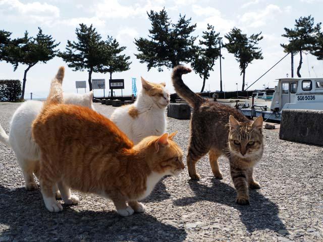 港でもプチ猫だまり