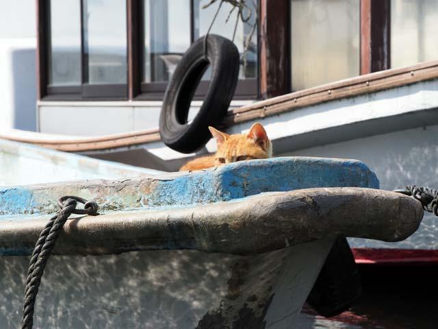 船にのる猫
