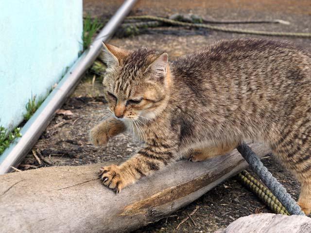 爪研ぎをする猫