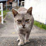 香川の伊吹島は猫島か?