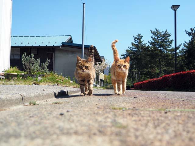 滋賀漁港の仲良し猫