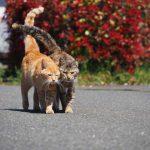 滋賀の猫漁港