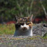 滋賀の猫漁港その2