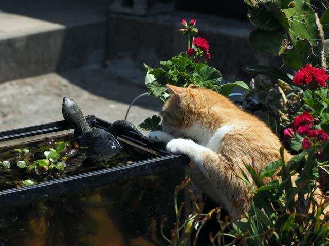 青島の猫。亀とねこ
