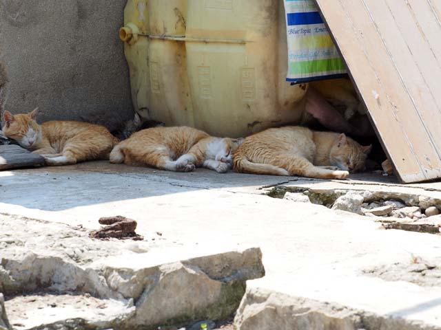 青島、日陰で仲良く寝る猫