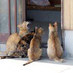 青島の猫(その2)
