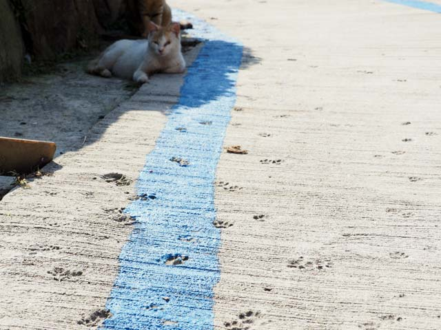 青島の猫スタンプ