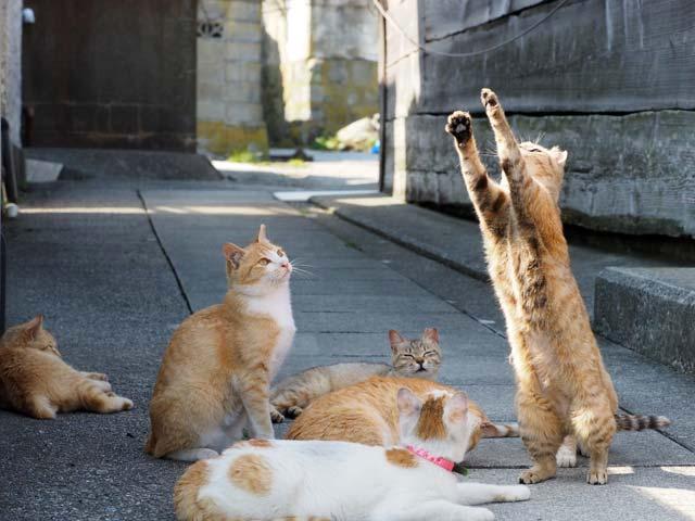 青島、訪問者と遊ぶ猫たち