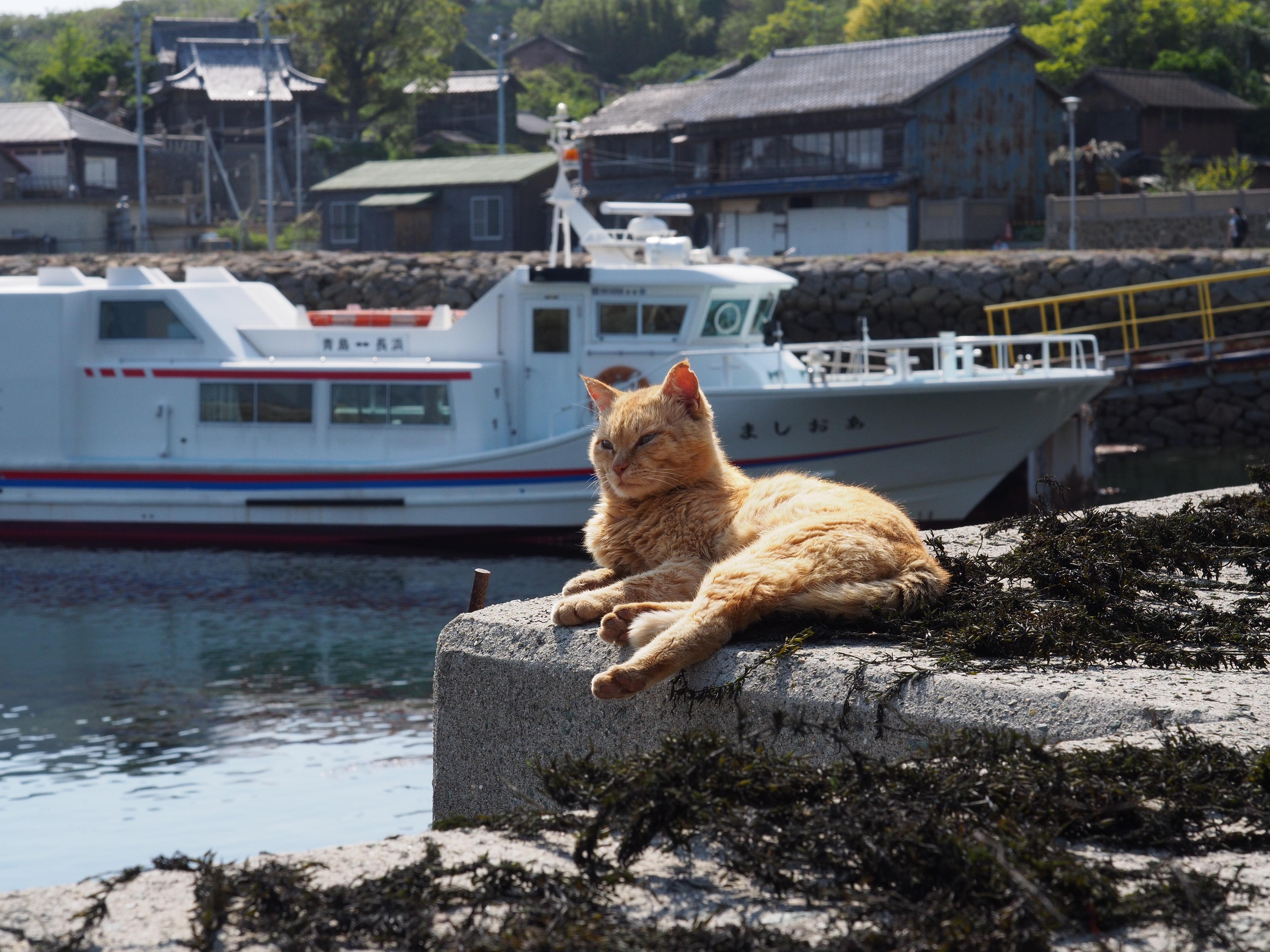 青島、猫と船