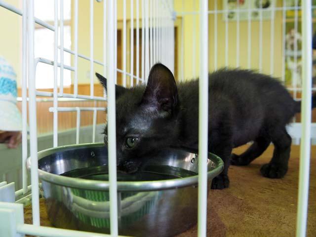 動物愛護センターの猫