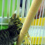 兵庫県動物愛護センターに行ってきました
