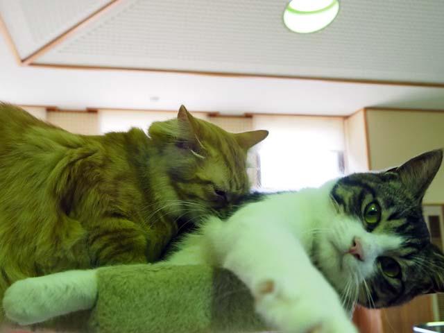 愛護センターの猫