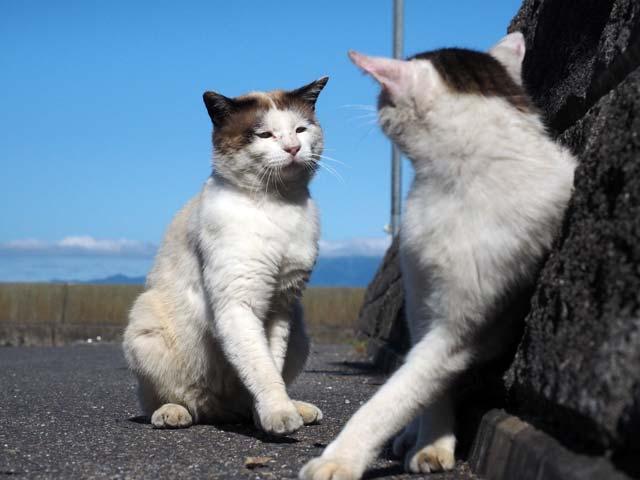 笑う猫の恋in琵琶湖