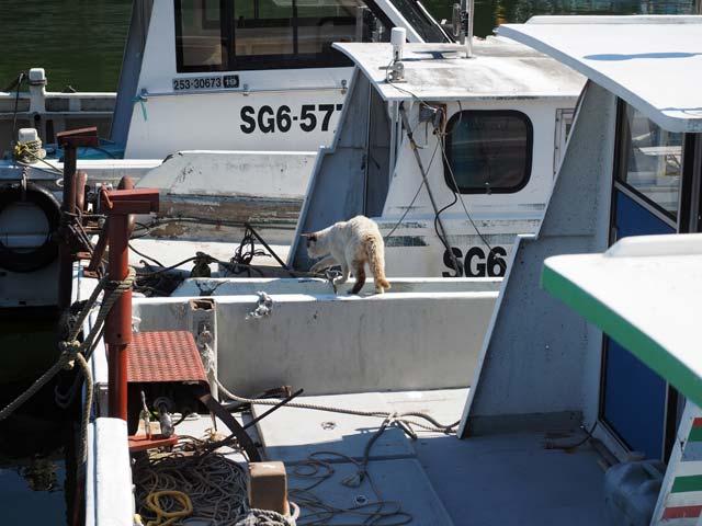 笑う猫と船in琵琶湖