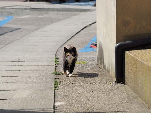 青島で猫とすれ違う