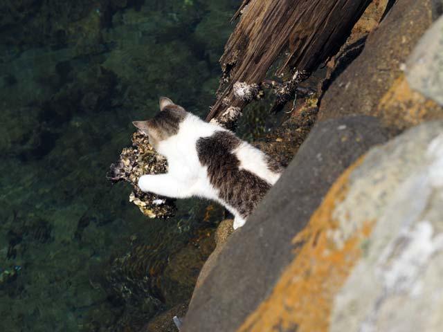 青島、海辺の猫