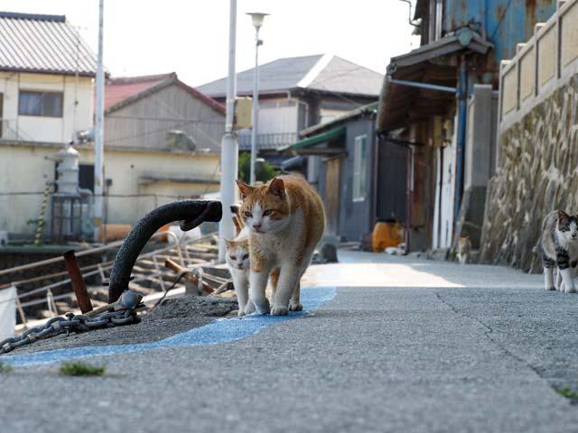 青島の集団猫