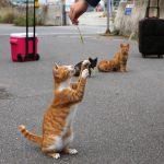 猫とアートの豊島(てしま)