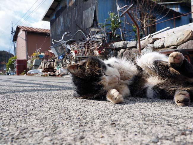 沖島の仲良し猫