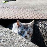 久しぶりの沖島と笑う猫