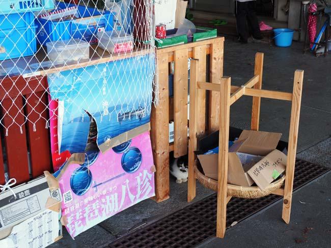 沖島の看板猫