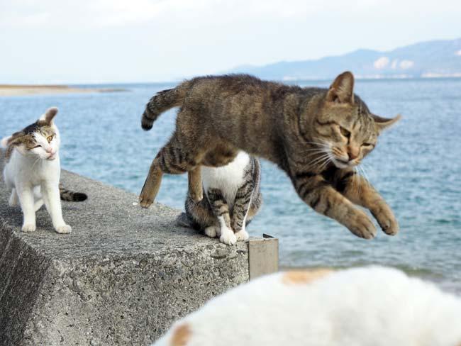 変顔でジャンプする猫